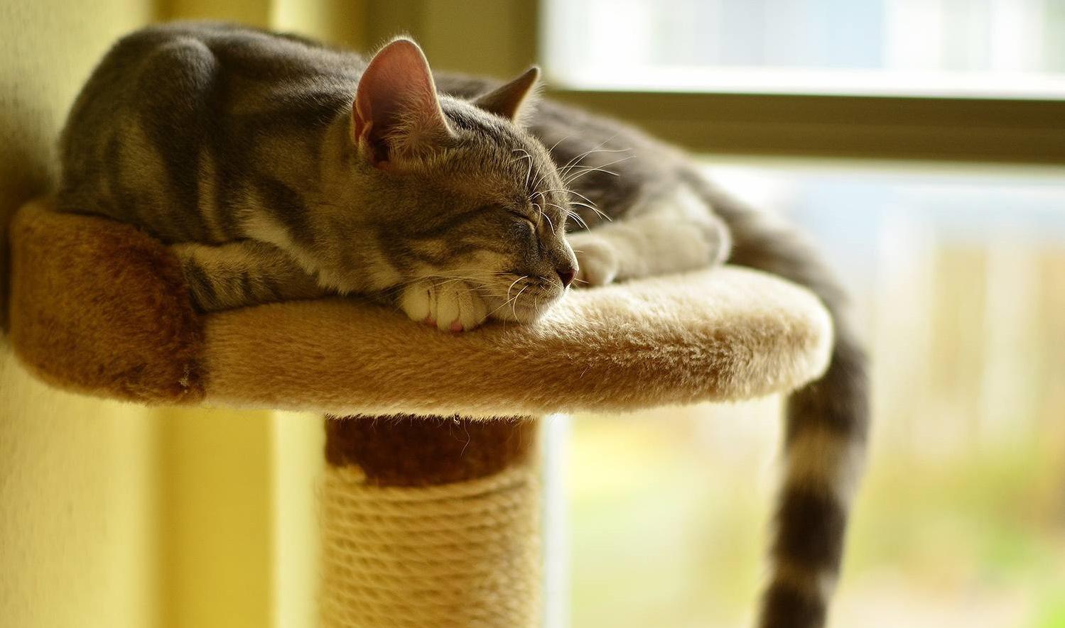 Tiragraffi per gatti: i migliori modelli online