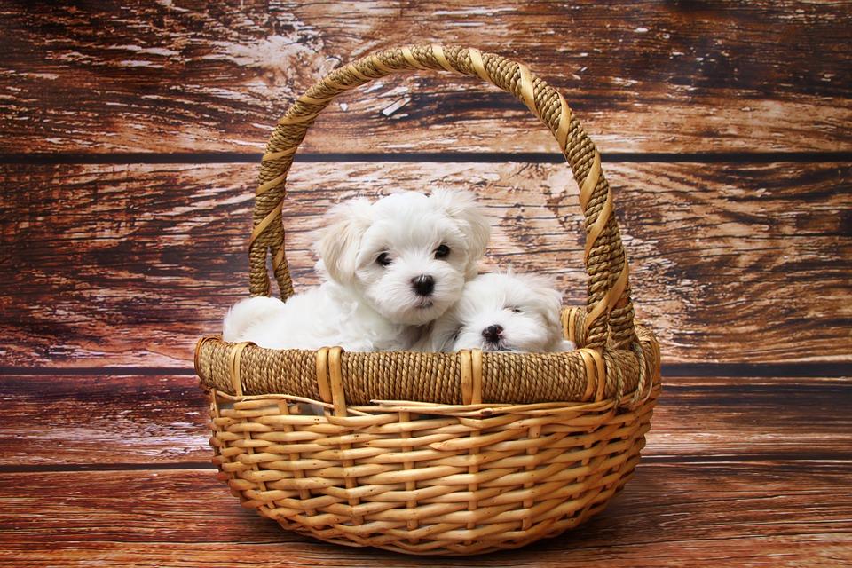cucce-per-cani
