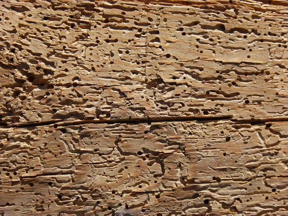 Come eliminare i tarli del legno e rinnovare i mobili - Brico.it
