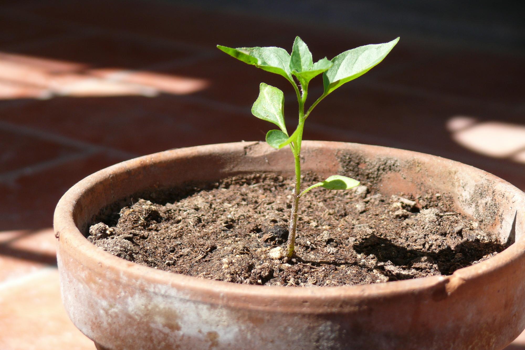 Orto sul balcone: ecco come organizzarlo e cosa coltivare
