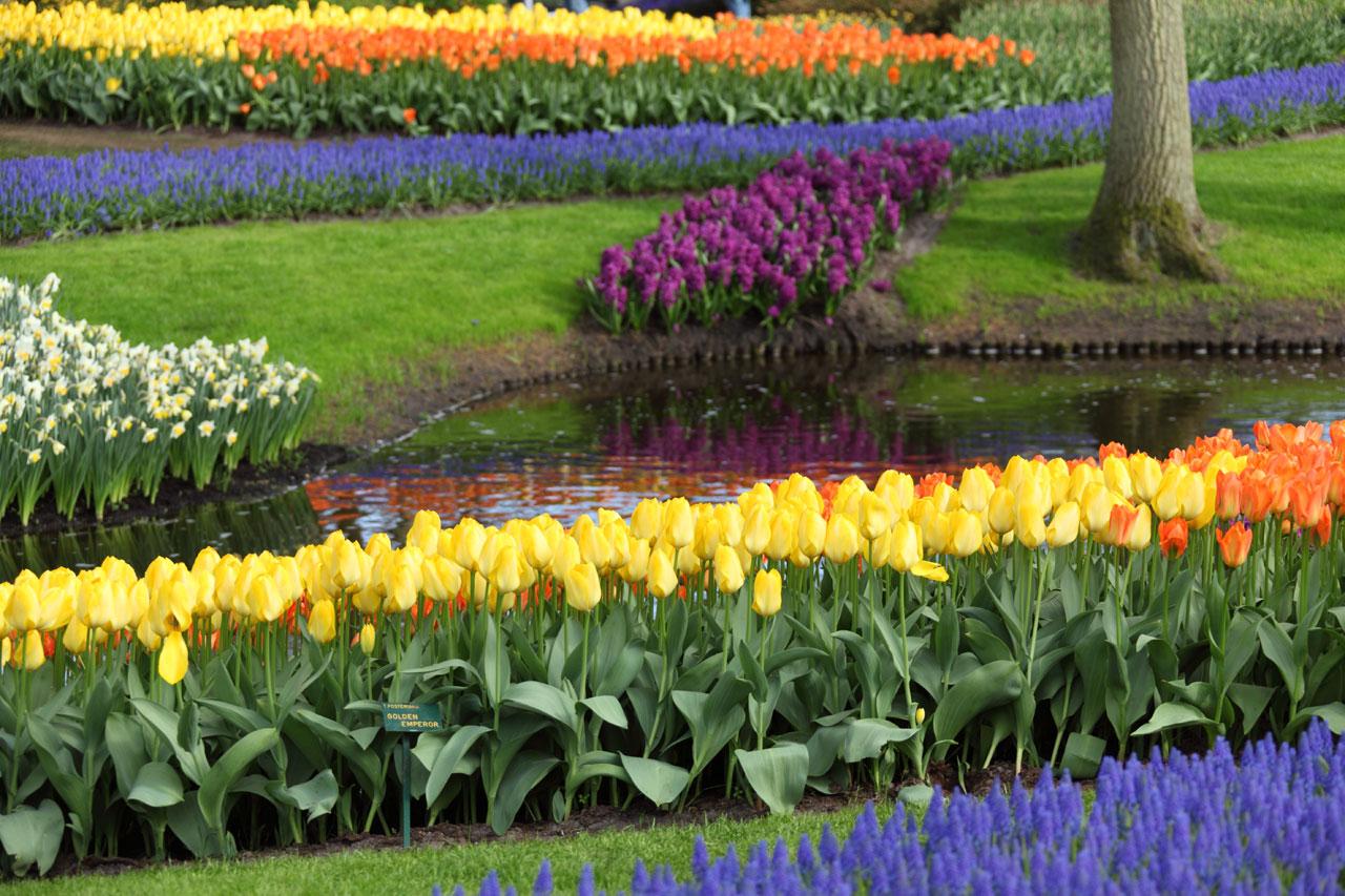 Piante da giardino le variet pi belle e facili da coltivare - Piante invernali da giardino ...