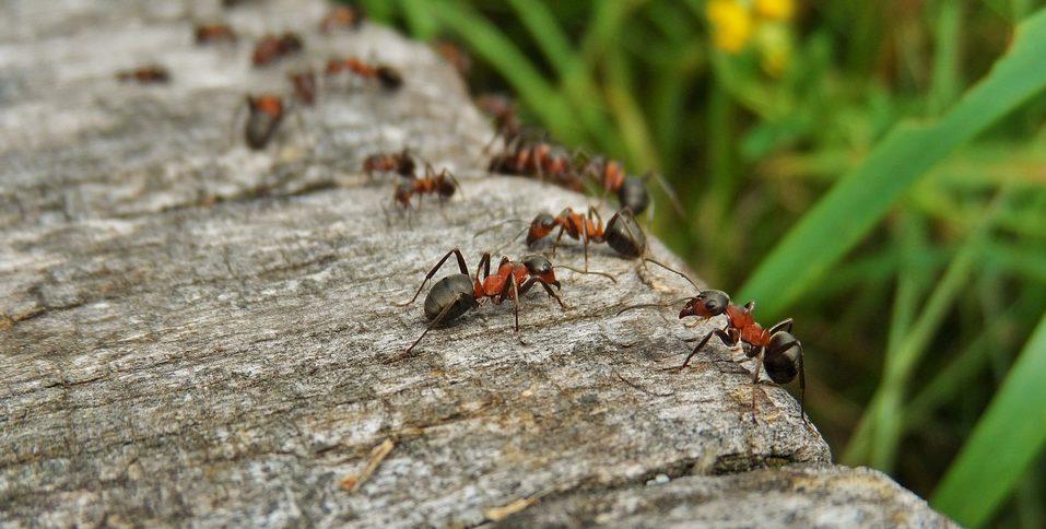 Come eliminare le formiche e tenerle lontane da casa - Eliminare formiche in casa ...