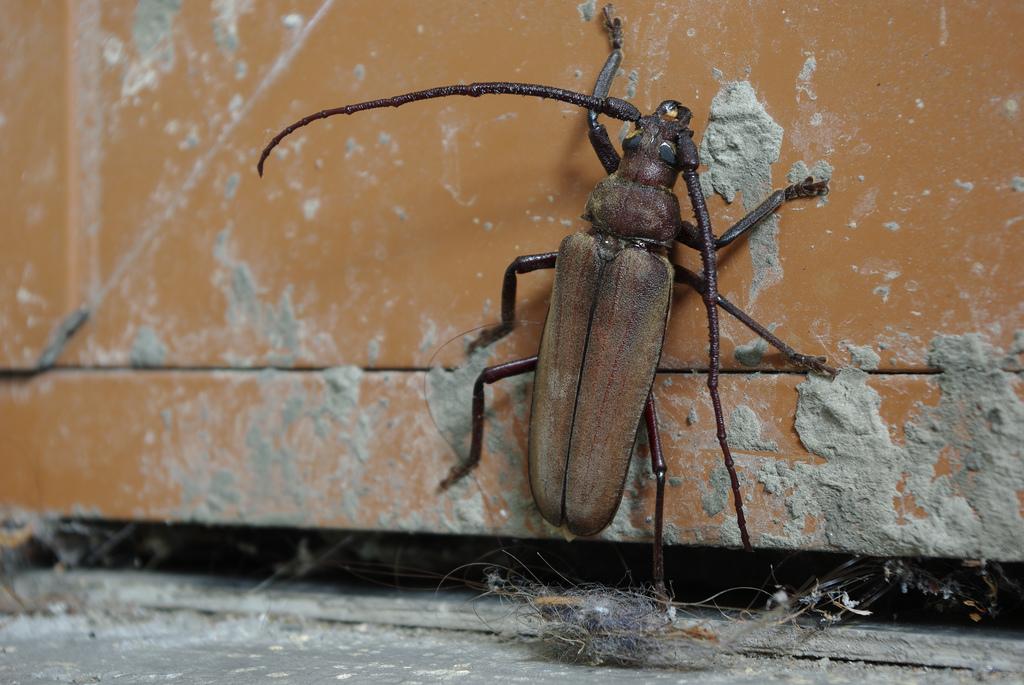Insetti in Casa: ecco come liberarsi di scarafaggi, formiche e zanzare