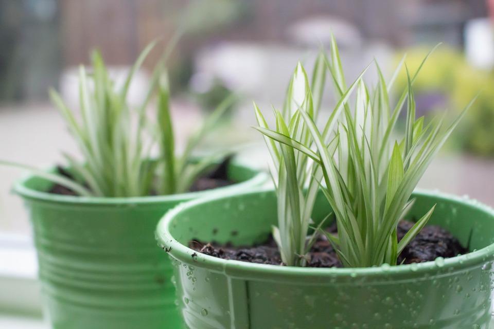 Piante da Balcone: fiori e vegetali perfetti per la coltivazione in vaso