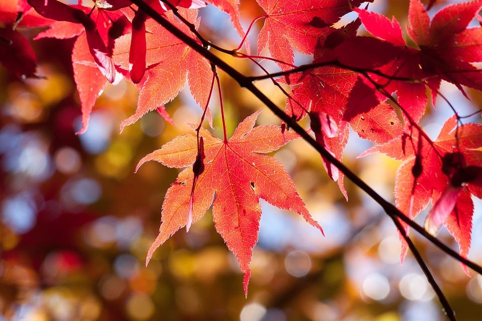 Acero-rosso