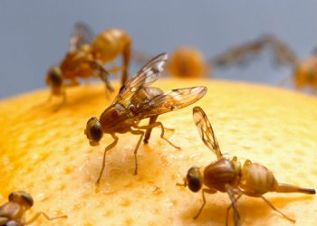 Come-tenere-lontane-le-mosche