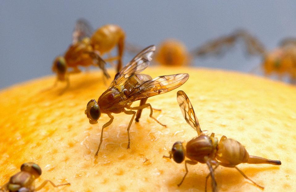 Come tenere lontane le mosche con rimedi naturali efficaci