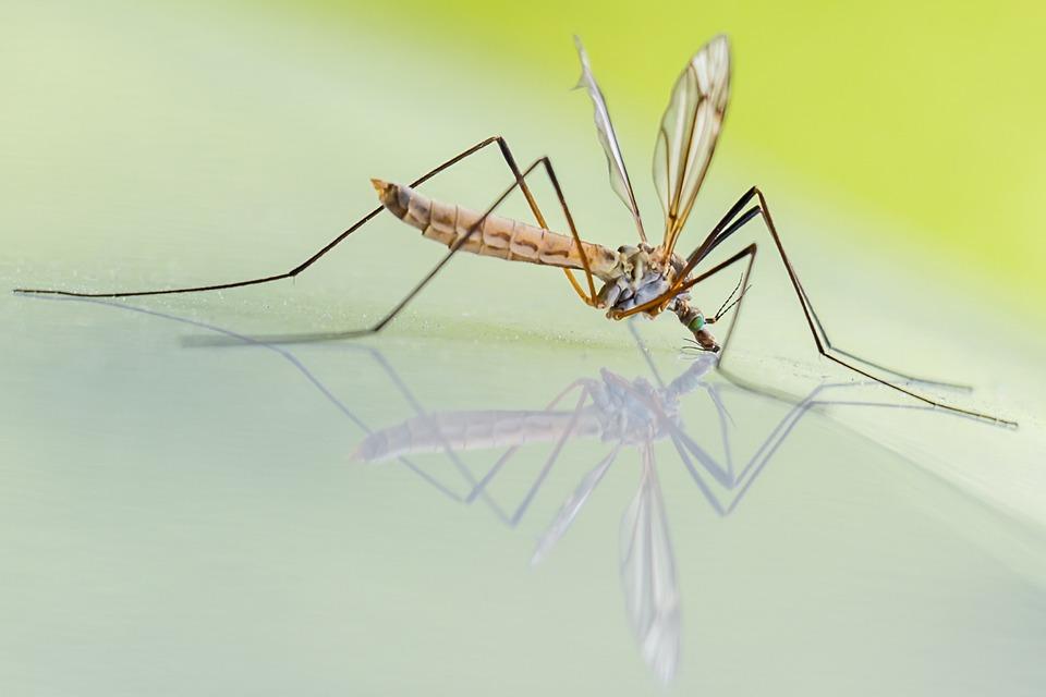 Come allontanare le zanzare: i rimedi più semplici ed efficaci