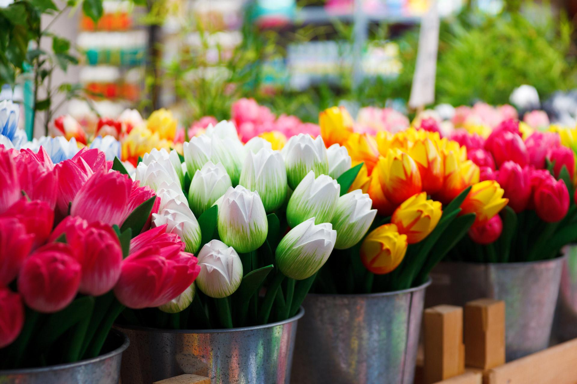 Piantare I Bulbi Di Tulipani come coltivare i tulipani in vaso: consigli e regole d'oro