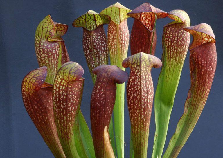 Piante da Interno: le varietà più belle e facili da coltivare