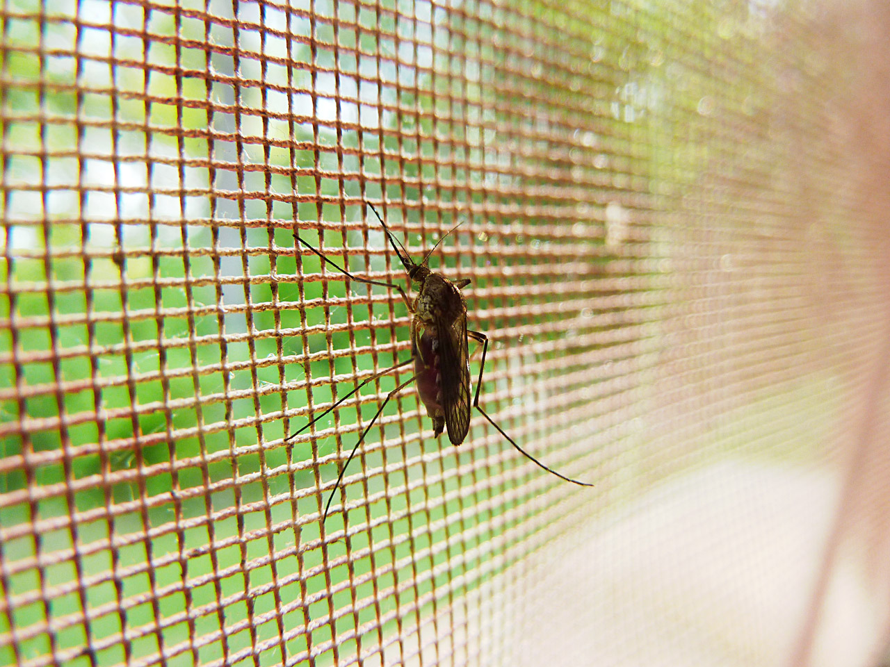 Zanzariere Fai Da Te: 3 metodi semplici per realizzare una zanzariera in casa