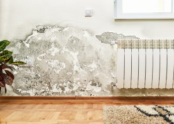 parete con muffa