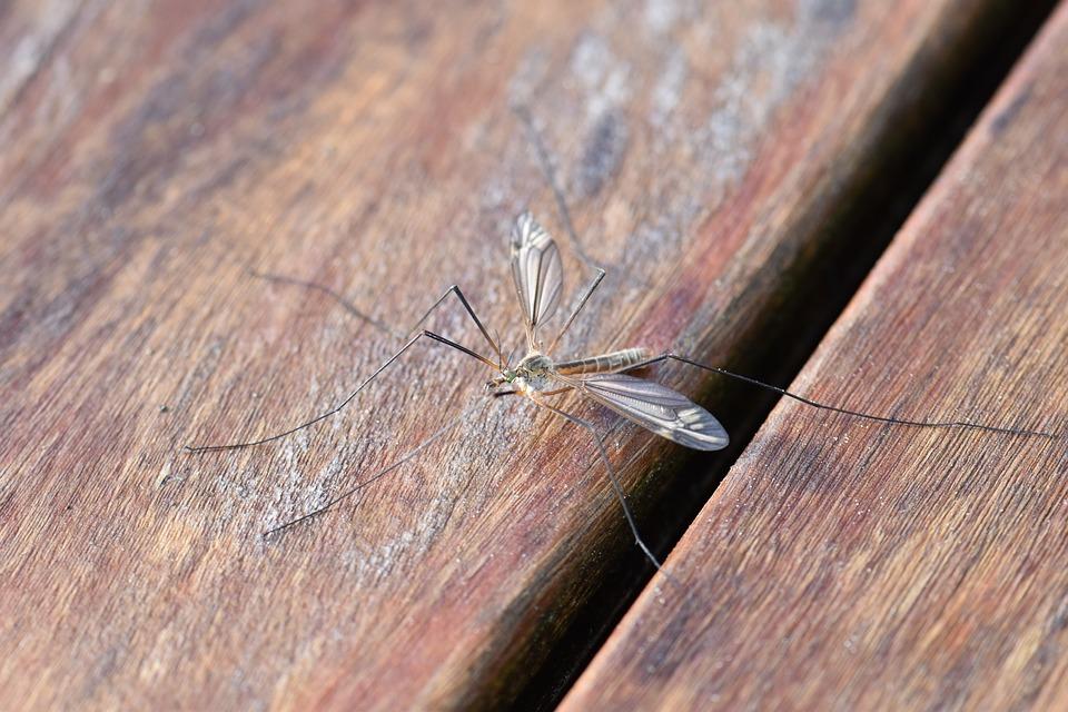 Piante contro le zanzare: quali sono e come si curano?